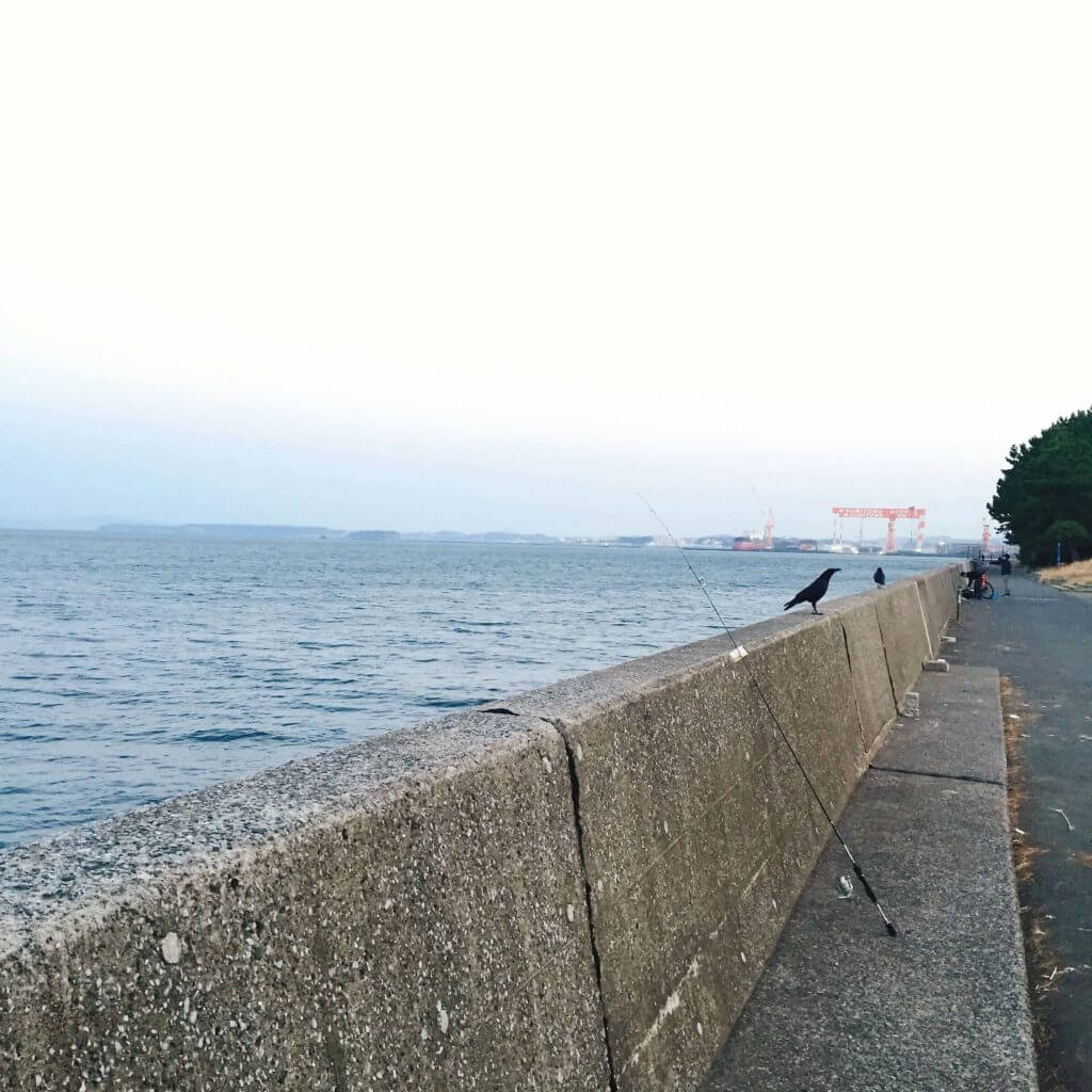 福浦岸壁 釣り カラス