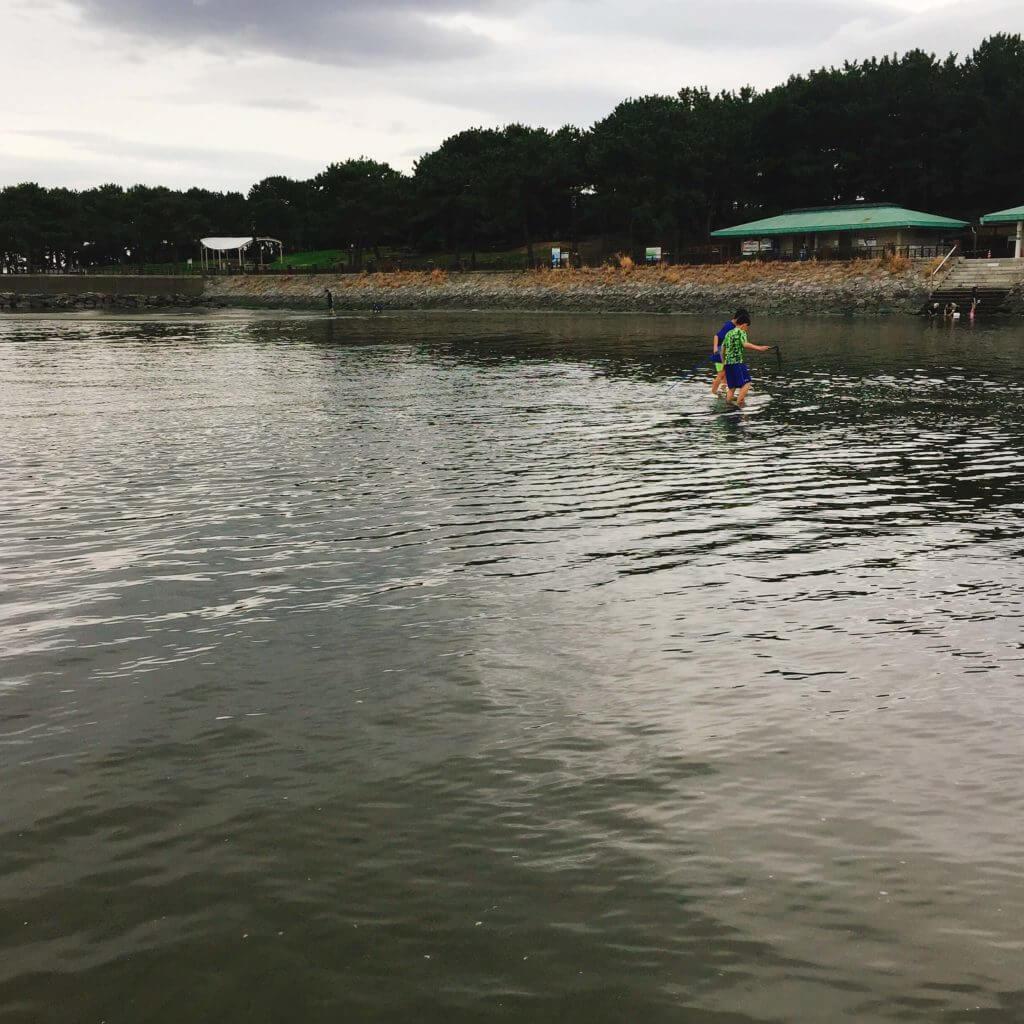 横浜市海の公園 潮干狩り