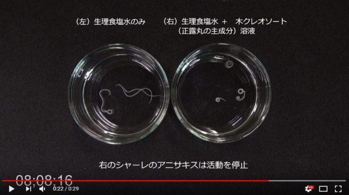 大幸薬品のアニサキス動画