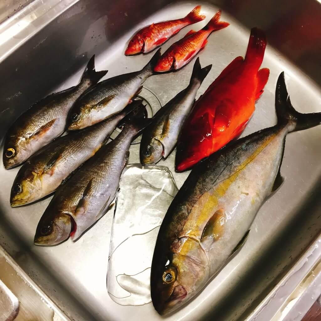 伊豆大島元町港の釣果