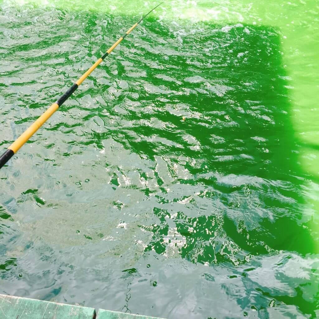 品川フィッシングガーデンでの釣り