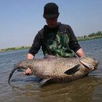 利根川でのアオウオ釣り(まつともの釣師さん)
