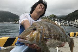 西伊豆で釣ったハマフエフキ(タマン)