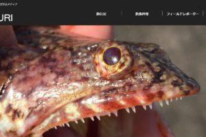 釣りメディアORETSURIのTOP画像