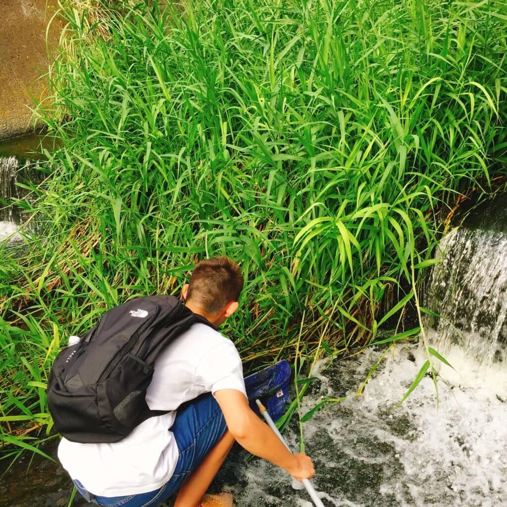 三浦半島の河川でガサガサ