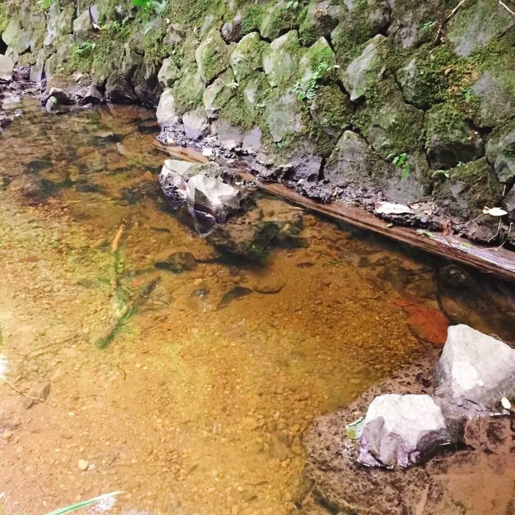 三浦半島の河川