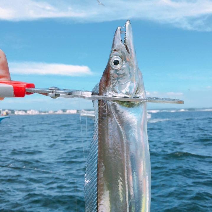 船釣りで釣ったタチウオ