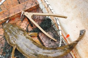 金沢漁港・相川ボートで釣ったマゴチ