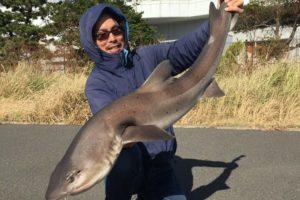 ふれーゆ裏で釣ったベイシャーク
