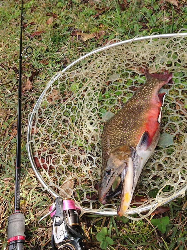 フィッシャーリゾート庄原での釣果
