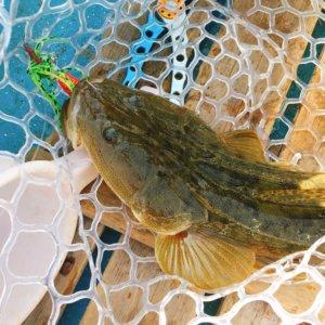 に 関東 近海 魚 で 迎える 梅雨 旬 を 時期