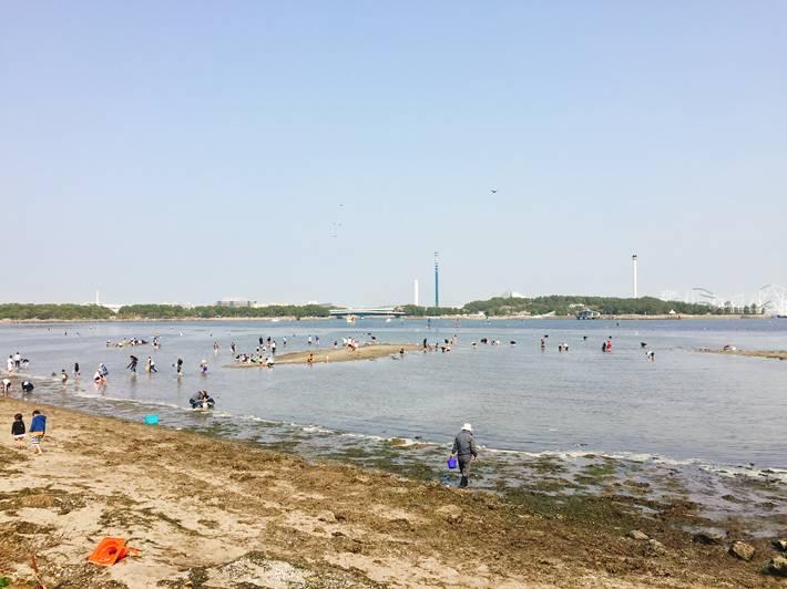 海の公園の潮干狩り
