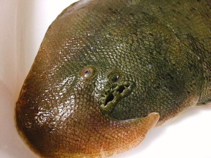 シタビラメの顔