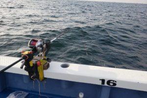 ライトヒラメ五目のエサを釣る