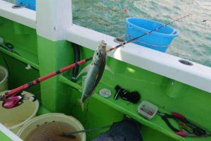 LTアジ釣り風景
