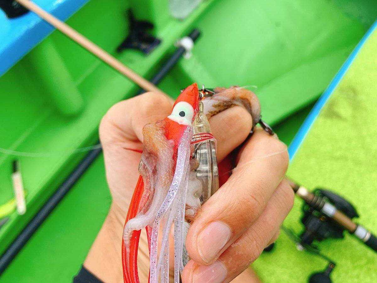 身切れした蛸の手とスッテ