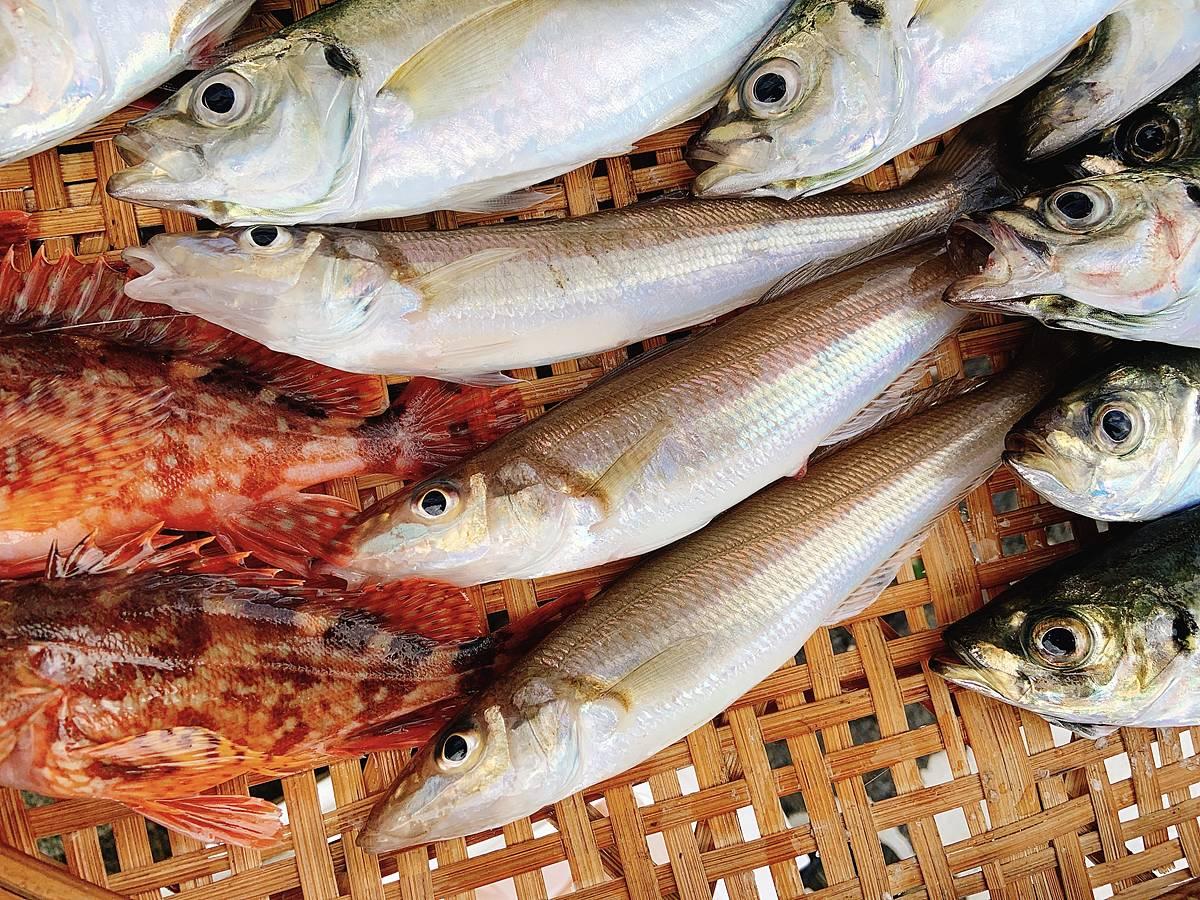 大津の手漕ぎボートで釣ったシロギス