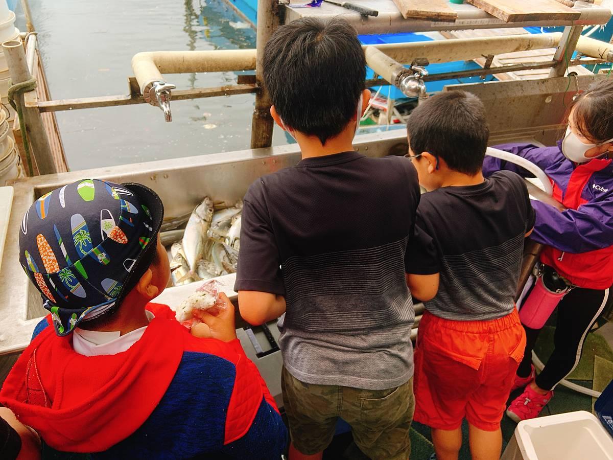 釣りあげた魚を観察する子供たち