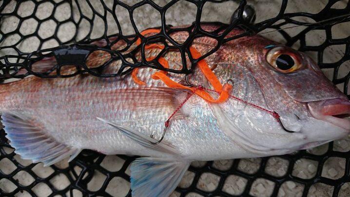 タイラバで釣った真鯛